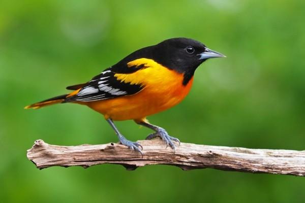 Gần 3 tỷ con chim đã biến mất vì biến đổi khí hậu và do bàn tay con người