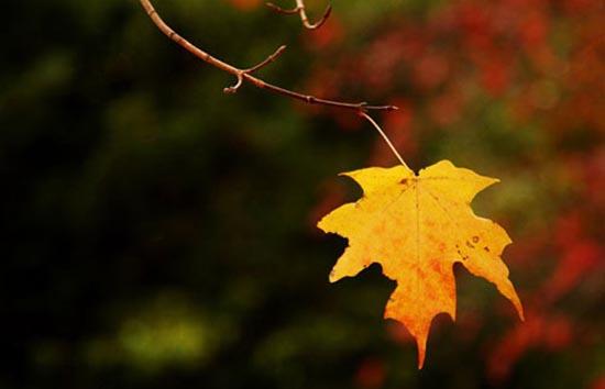 Tại sao lá rụng