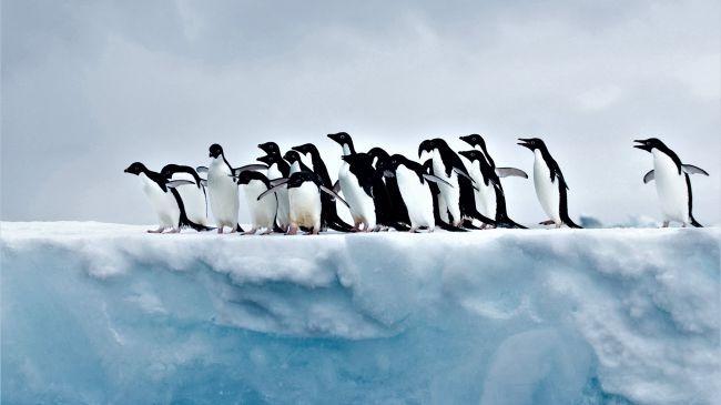Làm sao để la bàn cho chúng ta biết đâu là cực Bắc khi đang ở cực Nam?