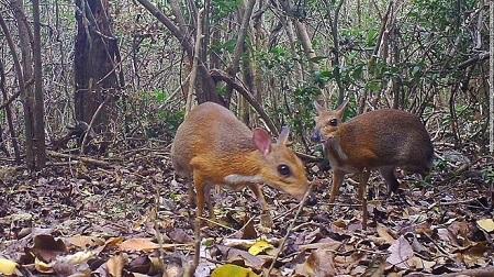 Cheo cheo lưng bạc, động vật bí ẩn nghi đã tuyệt chủng xuất hiện tại Việt Nam