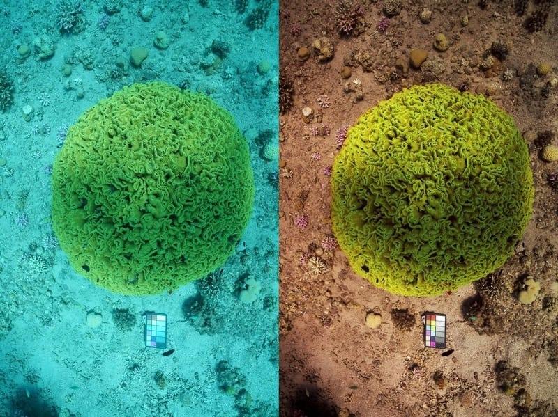 Xuất hiện thuật toán kỳ lạ giúp biến ảnh chụp dưới nước thành ảnh… trên cạn