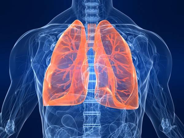 """""""Tất tần tật"""" những điều cần biết về phổi"""