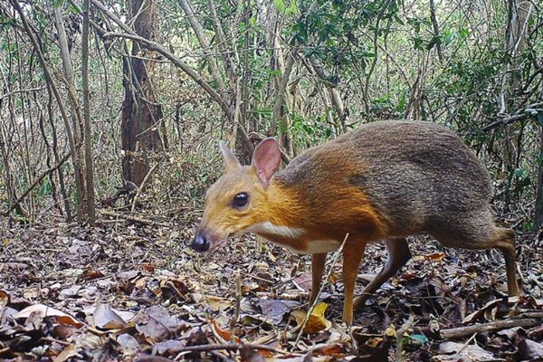 Google ứng dụng AI và hệ thống camera theo dõi cuộc sống của hàng triệu động vật để bảo tồn