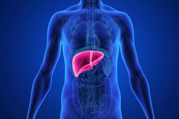 """Các nhà khoa học vừa tạo ra cỗ máy có thể """"nuôi sống"""" gan người 1 tuần ở ngoài cơ thể"""