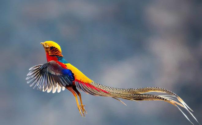 Những loài chim có bộ lông đẹp nhất thế giới