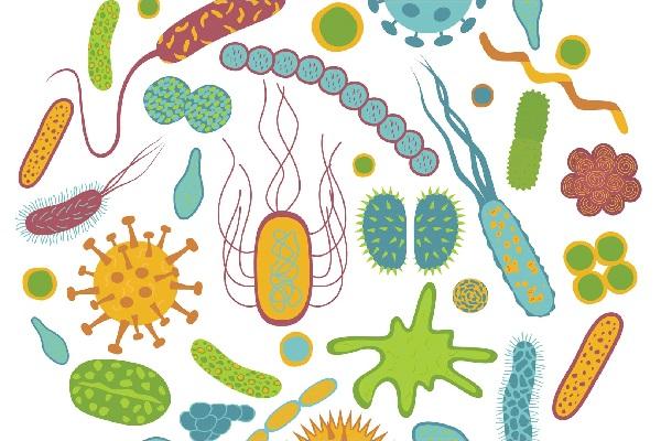 Ung thư và đau tim cũng có thể lây nhiễm qua hệ vi sinh vật trên cơ thể người