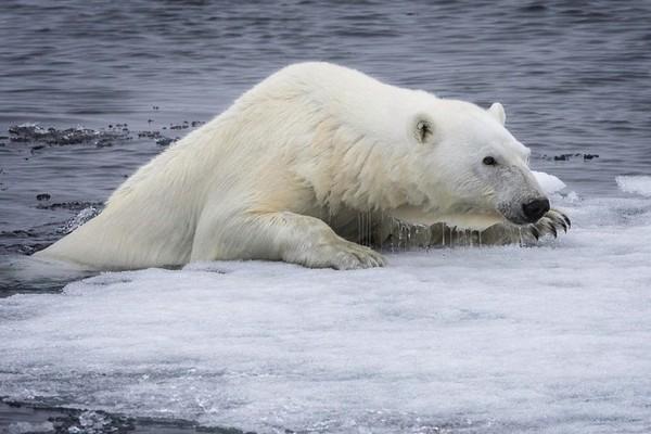 Điều hòa cũ không chỉ làm thủng tầng ozon mà còn làm tan băng ở Bắc Cực