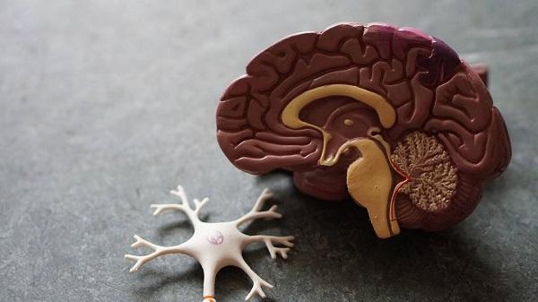Người bạn đời lạc quan sẽ giúp đẩy lùi bệnh mất trí nhớ