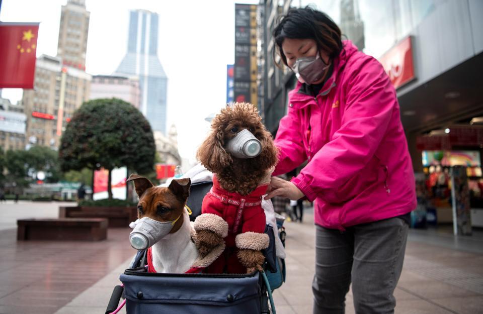 Các thành phố Trung Quốc dần trở lại cuộc sống bình thường
