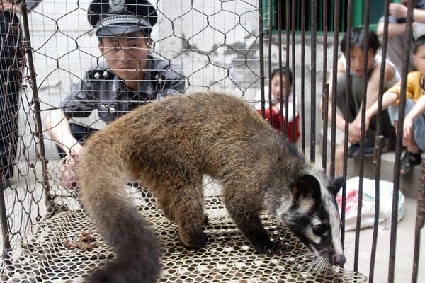 Quy mô của ngành chăn nuôi động vật hoang dã tại Trung Quốc khổng lồ tới mức nào?