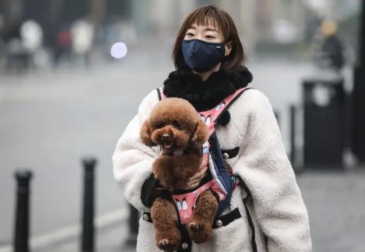 Hồng Kông khuyến cáo người dân không nên hôn hít chó, mèo để phòng tránh lây lan dịch bệnh