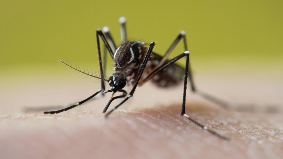 Virus West Nile lây lan khắp nước Mỹ qua muỗi cắn (Ảnh: Alamy)