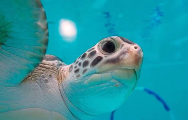 """Tại sao rùa biển lại """"nghiện"""" rác thải nhựa như vậy?"""