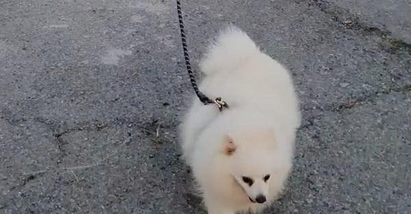 Bị cách ly tại nhà, chú chó này được chủ dùng... drone dắt di dạo