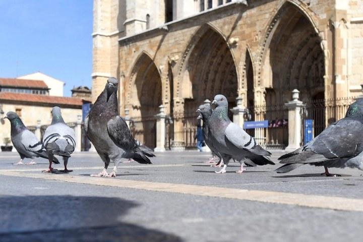 Chim thành phố thông minh hơn chim nông thôn vì phải suy nghĩ và… quan hệ nhiều hơn