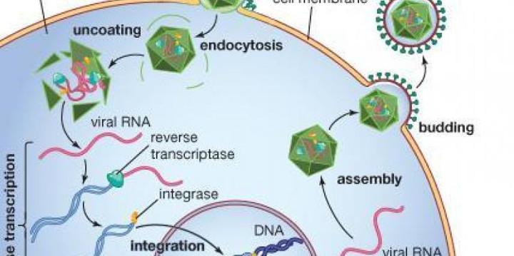 Một góc nhìn khác về virus: vai trò đặc biệt của virus trong sự tiến hóa loài người (phần 1)