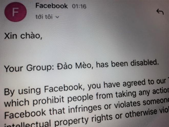 'Đảo mèo' - nhóm Facebook thú cưng lớn nhất Việt Nam bị xóa bỏ
