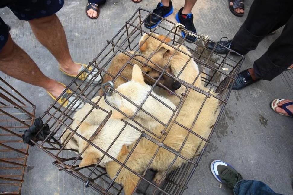 Trung Quốc dự thảo cấm nuôi chó làm gia súc để lấy thịt