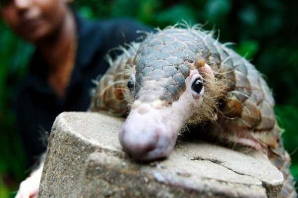 """""""Can thiệp"""" quá sâu vào đời sống của động vật hoang dã là nguyên nhân khiến nhiều virus lây lan tới con người hơn"""