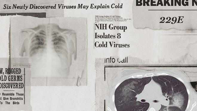 Lịch sử bí ẩn của họ virus corona