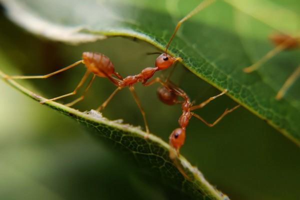 """Hơn 1,8 triệu người dùng tham gia một nhóm Facebook và tự """"huyễn hoặc"""" mình là... loài kiến"""