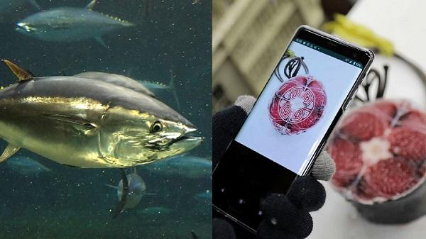 Nhật phát triển ứng dụng AI đánh giá chất lượng sushi cá ngừ
