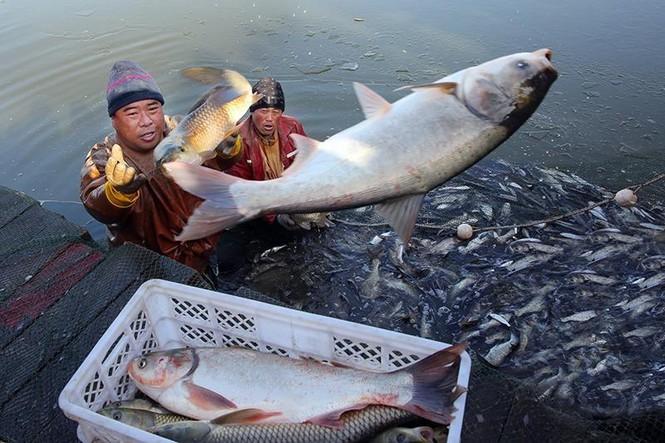 Vì sao Trung Quốc phải thả 10.000 con cá sau khi xây xong đập Tam Hiệp