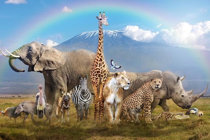 Các nhà khoa học biết được độ tuổi của các loài động vật bằng cách nào?