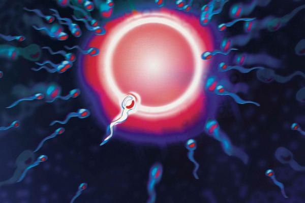 Các nhà khoa học vừa phát hiện ra cách tinh trùng thực sự bơi như thế nào?