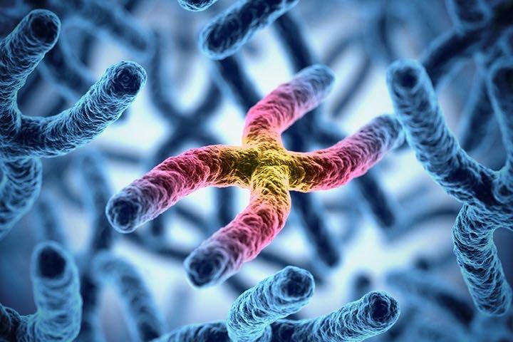 Tại sao hầu hết loài người lại có 23 cặp nhiễm sắc thể?