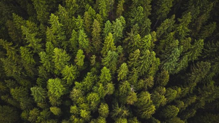 """Nghiên cứu: Khí quyển càng nhiều CO2, cây cối càng """"chết yểu"""""""