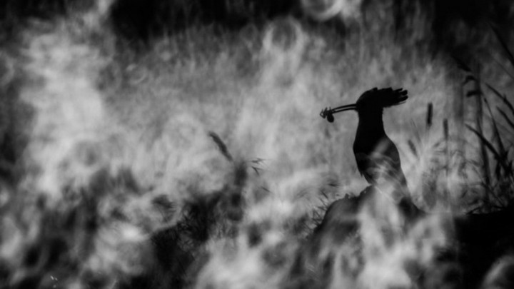 Ngắm các tác phẩm xuất sắc thắng giải thưởng Nhiếp ảnh gia loài chim 2020