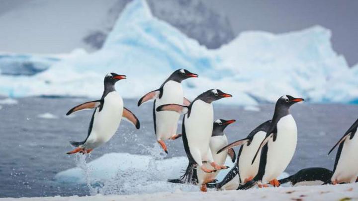 Băng tan tại Nam Cực làm lộ xác chim cánh cụt có thể chết từ cách đây 800 năm trước