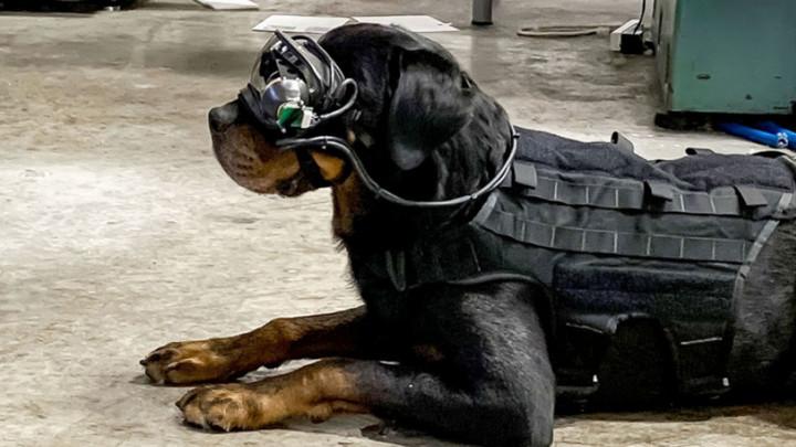 Chó đặc vụ Mỹ sẽ được trang bị kính AR và nhận lệnh từ xa của con người dễ dàng hơn