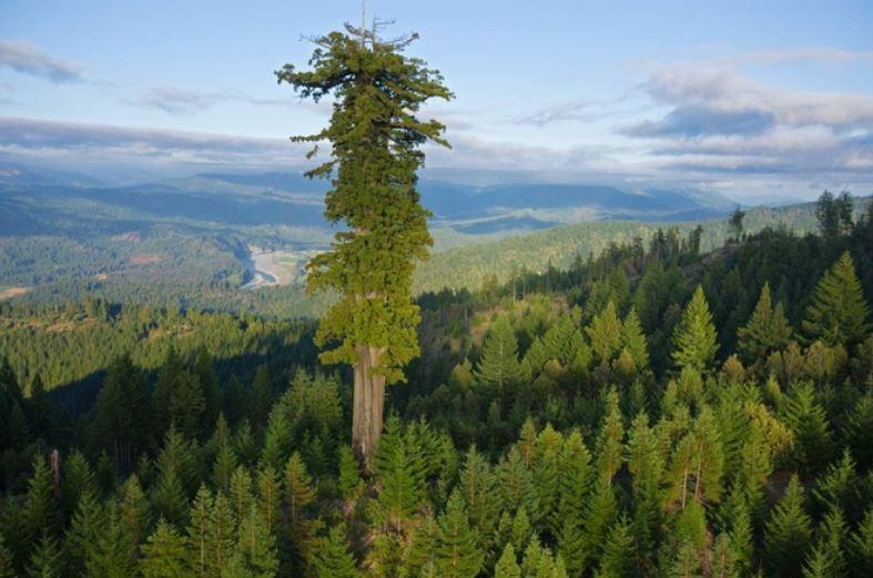 Vì sao cây cối không thể cao mãi?