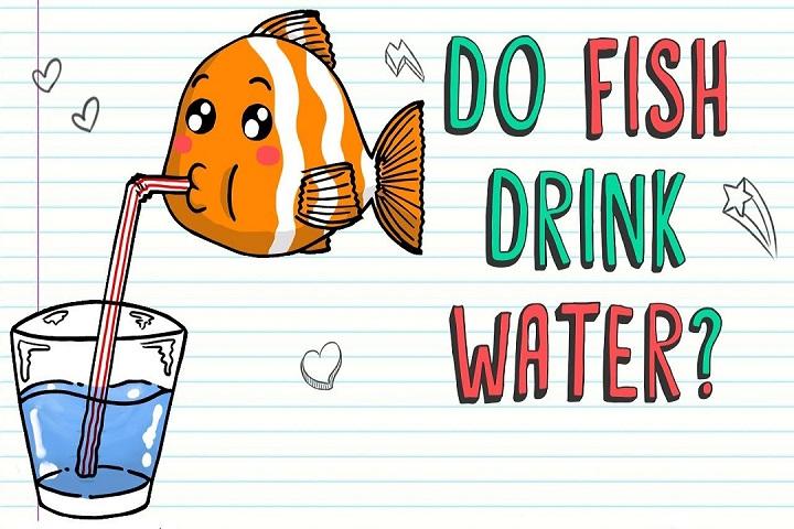 Cá sống dưới nước nhưng có bao giờ chúng khát nước?