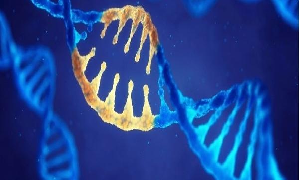 Bạn có biết: gen di truyền cũng ảnh hưởng đến đam mê kinh doanh