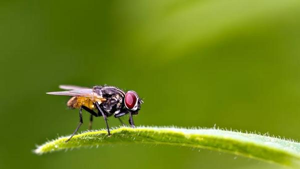 Tại sao bạn rất khó đập được ruồi?