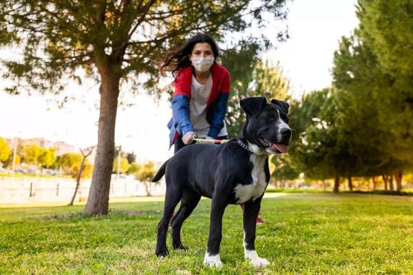 Chó và mèo cũng cần có vắc-xin COVID-19 riêng?