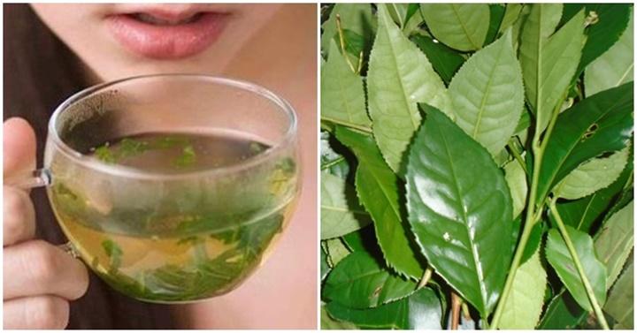 Uống trà xanh thế nào cho đúng chuẩn, không gây hại cho sức khỏe?