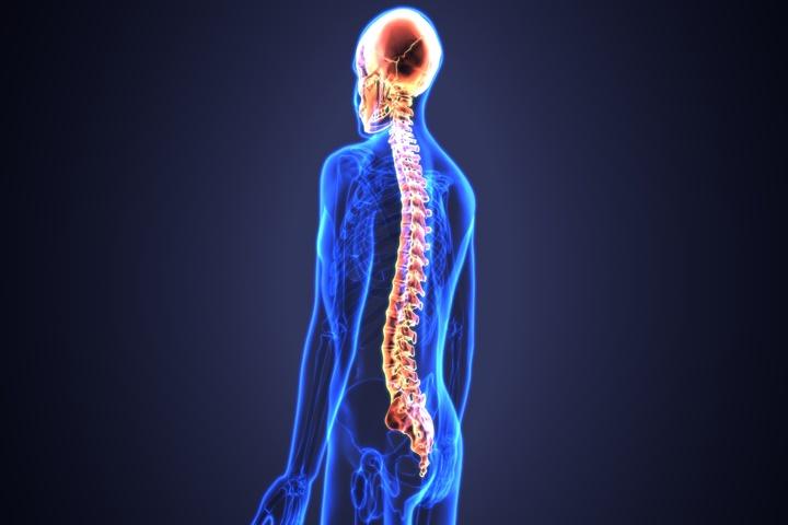 Các bác sĩ có thể đã tìm ra cách chữa trị chấn thương tủy sống