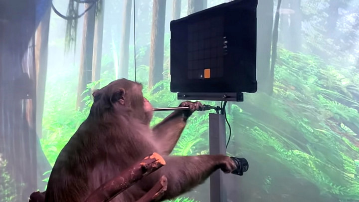 Chú khỉ được cấy chip vào não của Neuralink có thể chơi Ping Pong bằng ý nghĩ