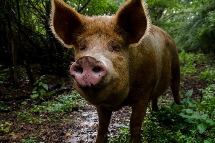 Trang trại ở Anh trở thành thiên đường đa dạng sinh học nhờ để động vật tự chủ