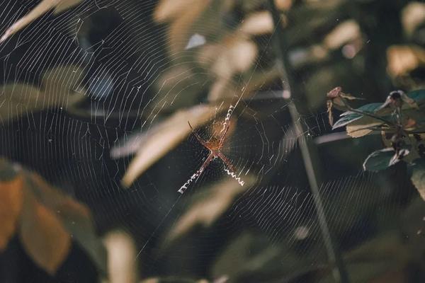 Mạng nhện phát ra âm thanh như thế nào?