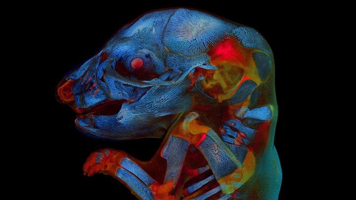 Bào thai chuột mắt đỏ phát sáng giành chiến thắng trong cuộc thi ảnh kinh dị toàn cầu