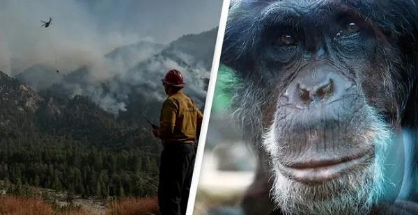 Con người đã tác động tới 97% hệ sinh thái trên bề mặt trái đất