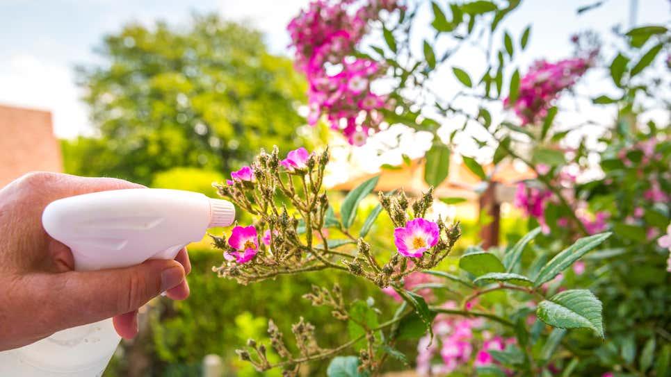 10 công dụng bất ngờ của giấm: sử dụng để chăm sóc vườn, cây cảnh