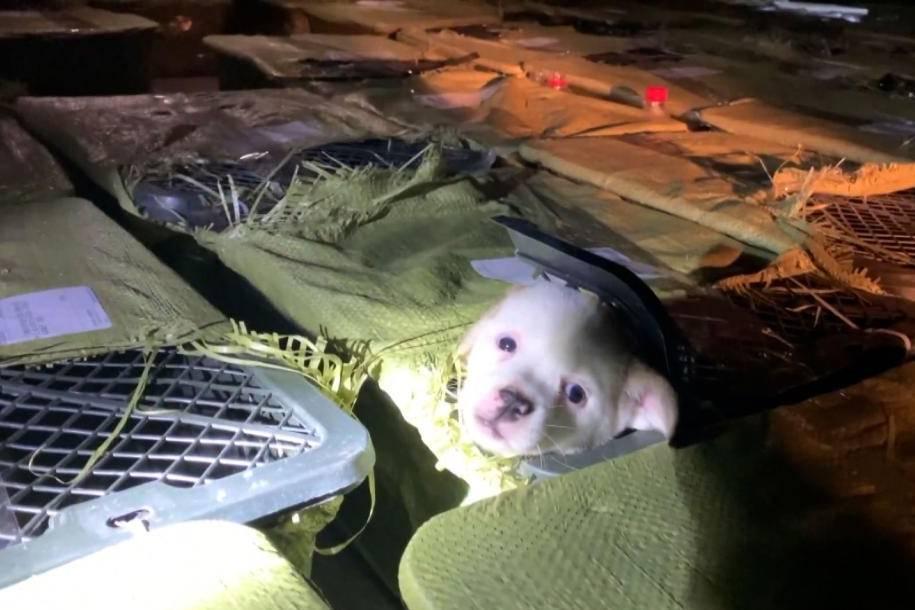 Chó con, mèo con chết thảm hé lộ mặt tối đáng sợ đằng sau cơn sốt hộp bí ẩn ở Trung Quốc