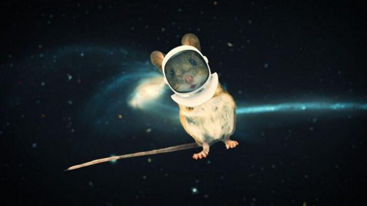 Tinh trùng chuột đông khô nhiều năm mang từ ISS về Trái Đất vẫn thụ tinh thành công
