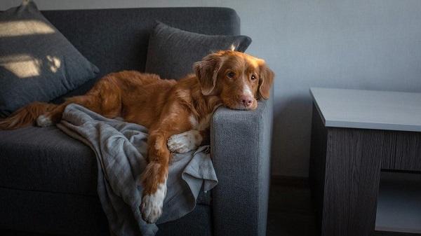 Vì sao chó luôn ngồi vào chỗ của bạn?